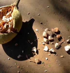 baobab pod open